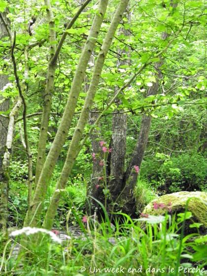 Sentier du Granite - La Rouvre - La Roche d'Oëtre