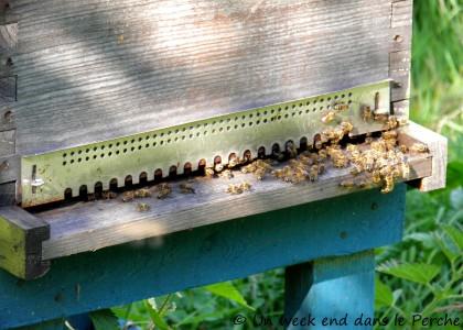 abeille de nicolas verrier