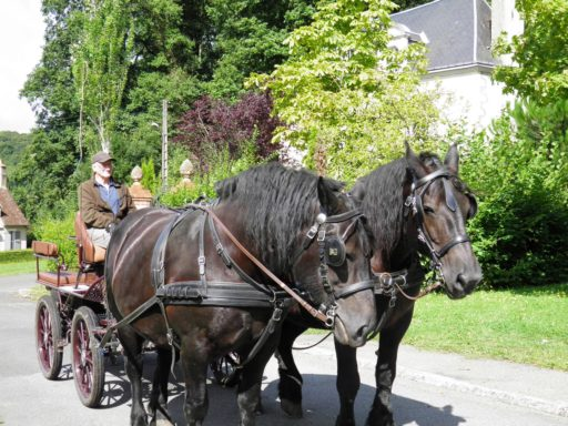 belleme-attelages-percherons